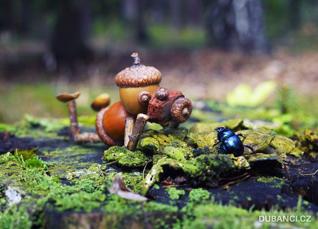 houby nej u00edm  nechutnaj u00ed mi  ale jakmile rostou  neodol u00e1m a