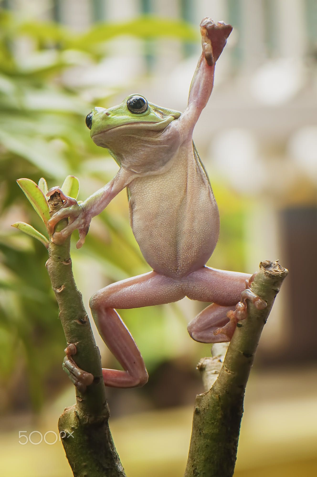 I'm the King of the World! Woop woop! Cute frogs, Frog