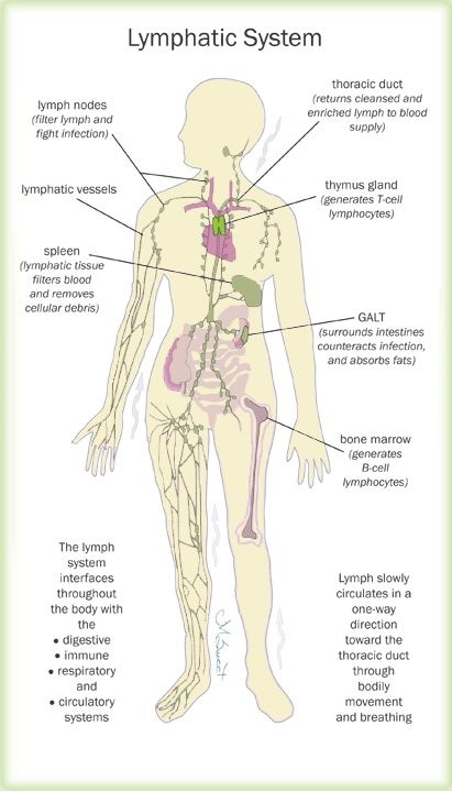Lymphatic Drainage Massage: What Is It For? | Theory | Pinterest ...