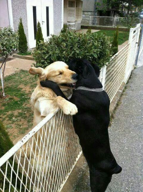 Now that's love! Best friends <3