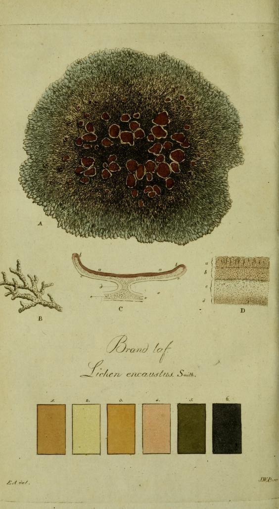 Copy 1 - Svenska lafvarnas färghistoria : - Biodiversity Heritage Library