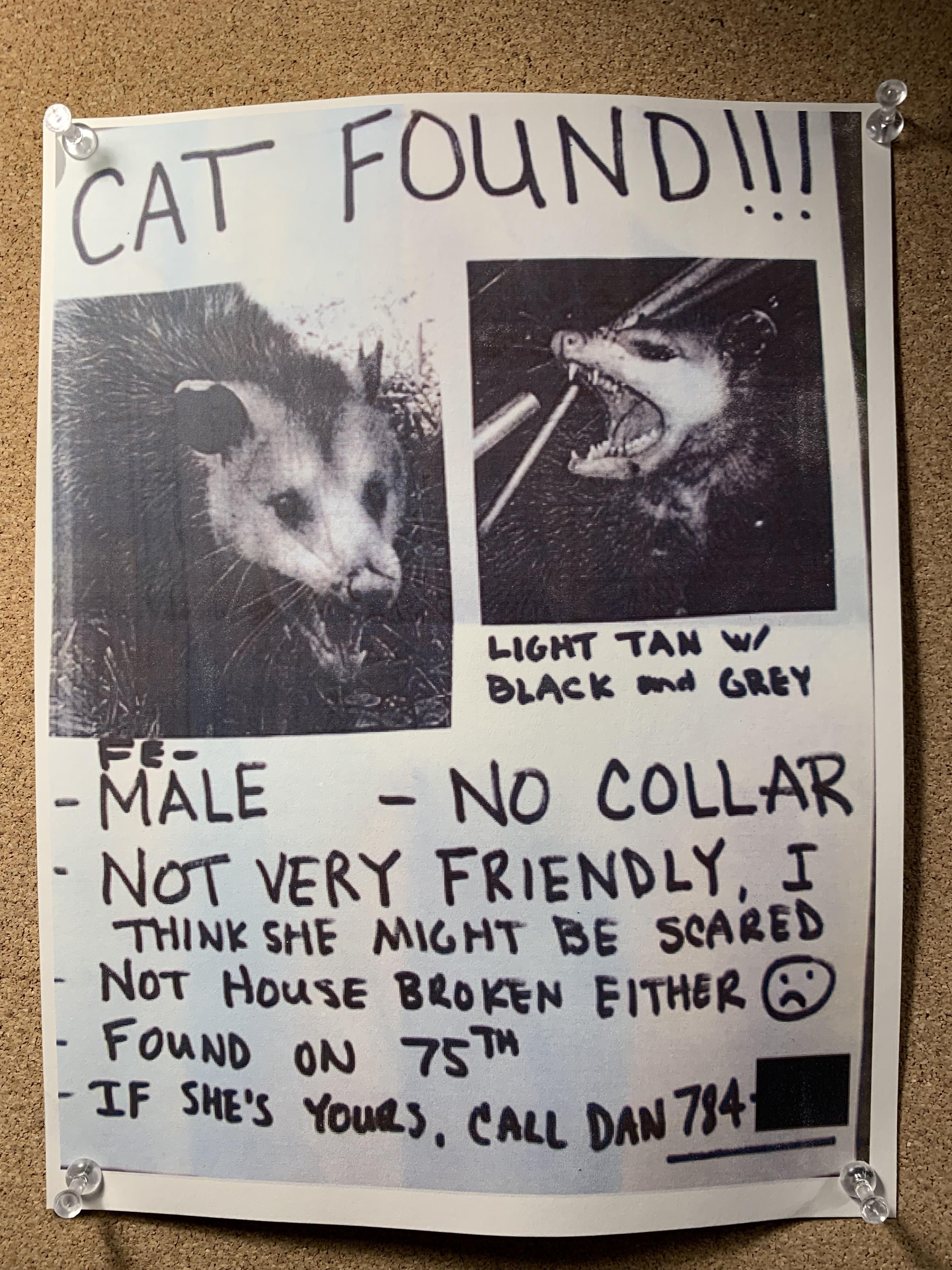 Found Cat flyer at local restaurant Found cat, Cats