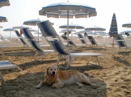 Spiagge cani rimini vacanze con animali bagno egisto 38 viserba cani in spiaggia e al mare - Bagno 38 rimini ...