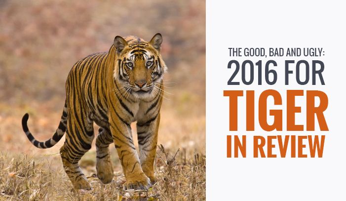 2016 has proved to be a roller coaster ride for the tigers - some good results, some bad results, and some potentially ugly. So heres a top line summary of what happened in 2016.