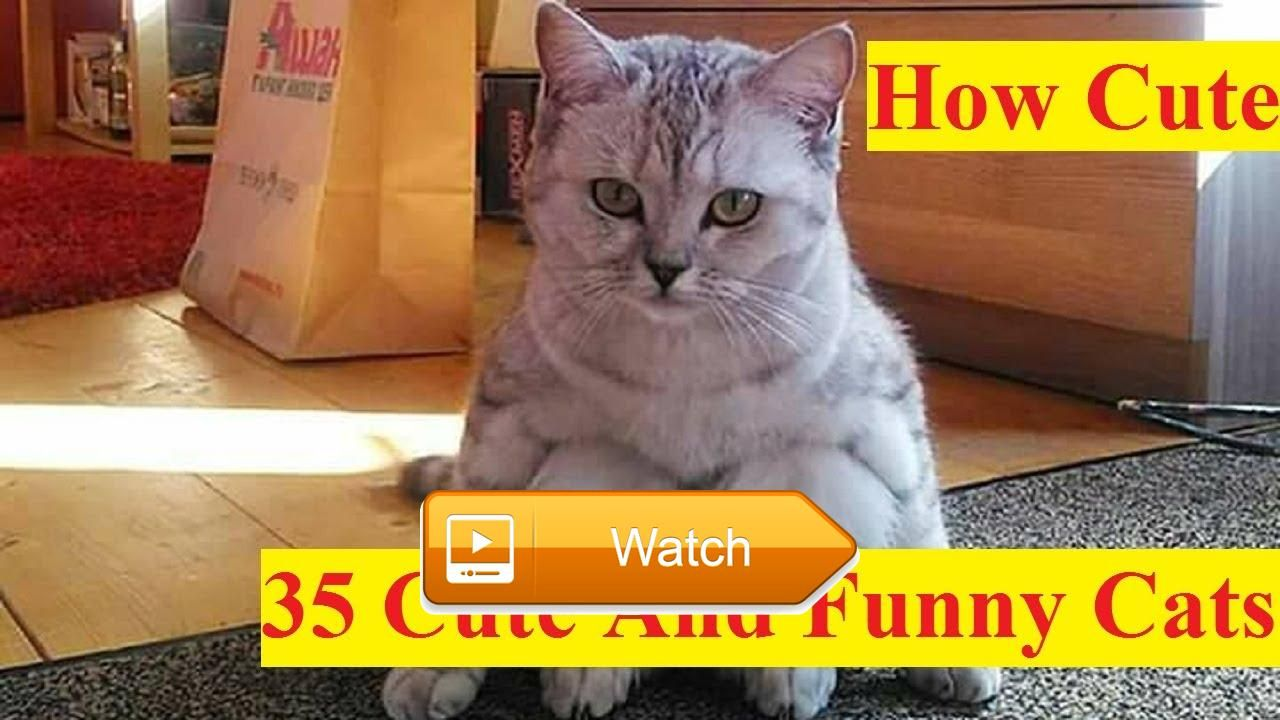 Cats Are So Cute You Try Not To Laugh Funny Cat pilation 2017