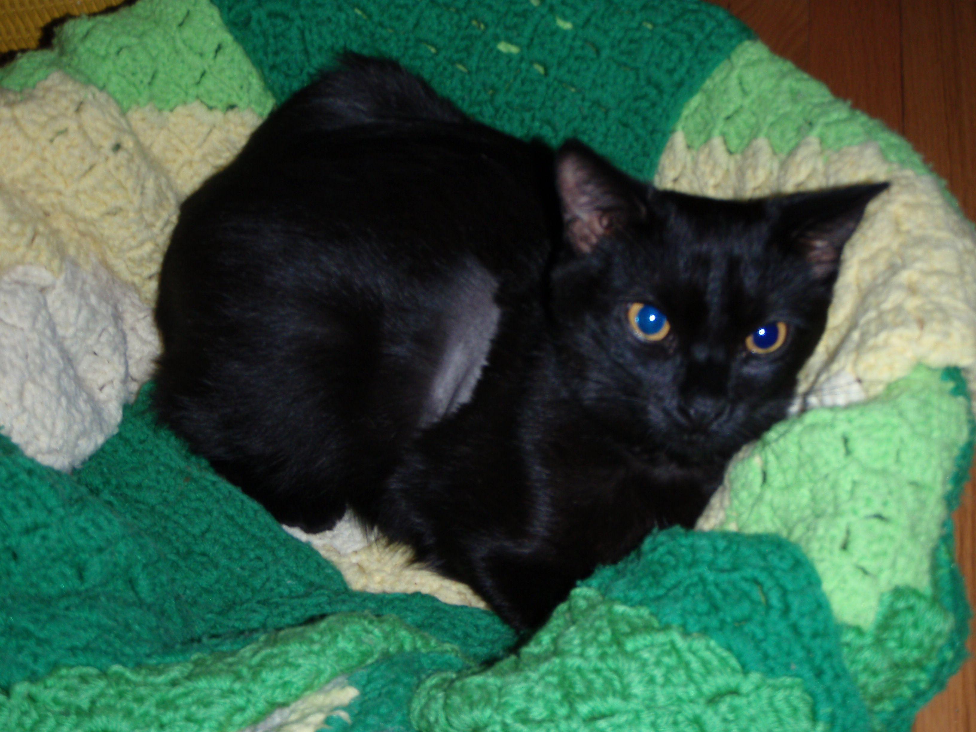 Saiyoko Feline, Animals, Cats