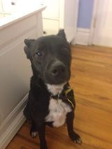 Can I crash on your couch for a little while (foster) or better yet forever?  ''Hi, my name is Gibson. I have been living on the streets of Brooklyn NY, dodging cars and trying to make it through life one day at a time'' please see comments for more info.