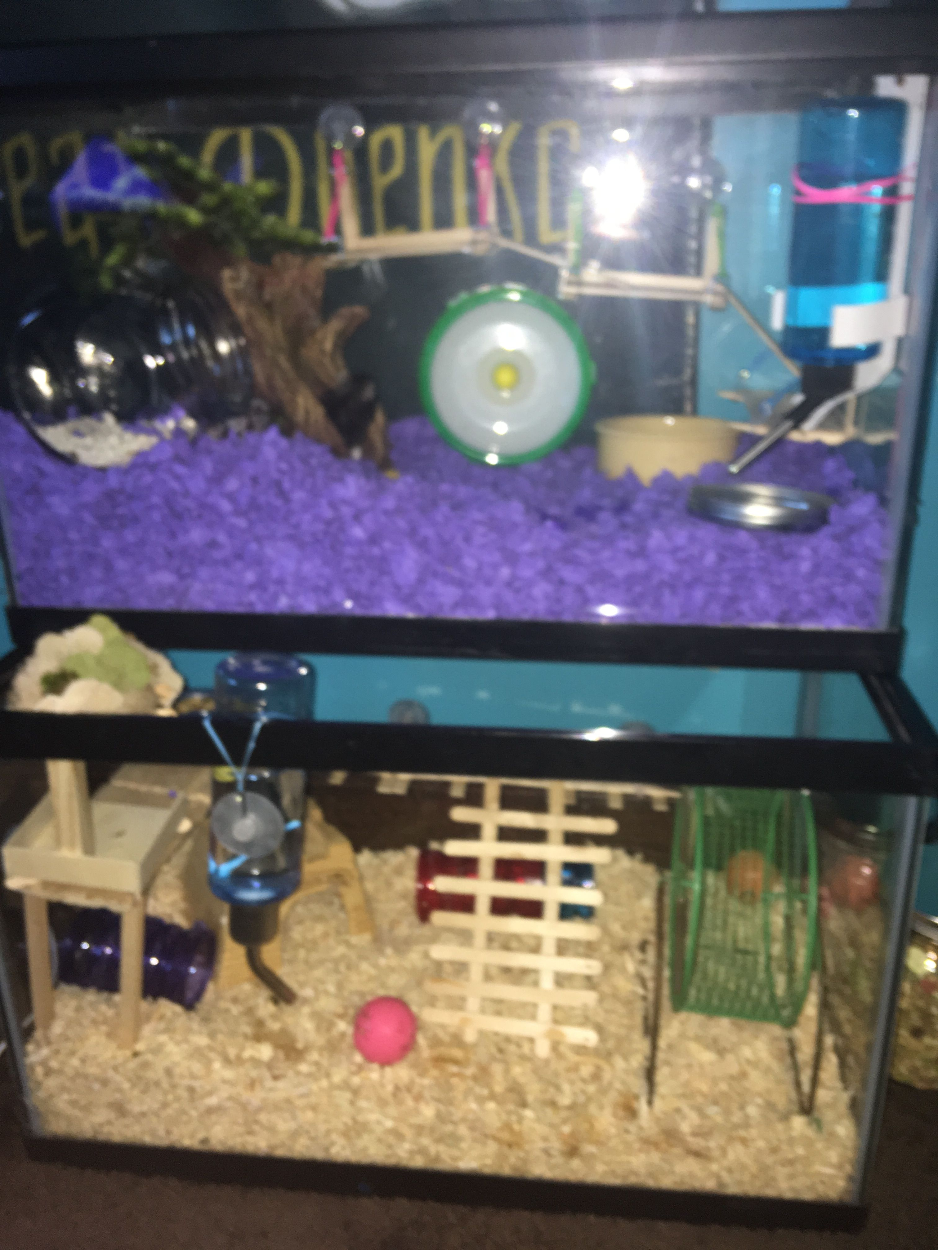 My Hamster Cages