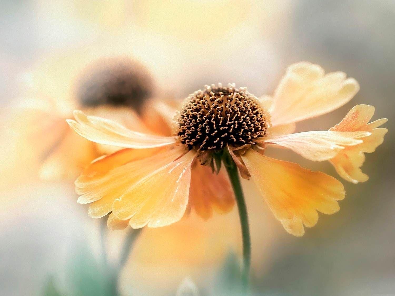 Pin by alexandrina carmen ene on flowers photography digital art flowers izmirmasajfo
