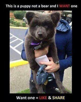 Fantastic Akita Chubby Adorable Dog - 4a6740ec28989c858a83a02c0a41cee5  HD_423119  .jpg