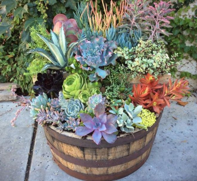 Ideas For Using Wood Barrel Planters To Add Charm To The Garden