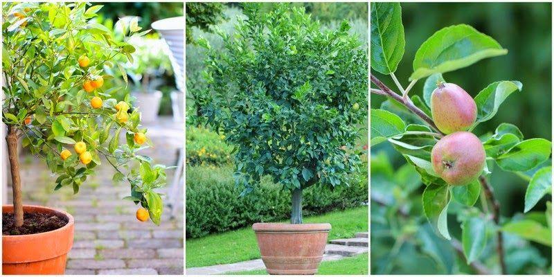SMÅ TRÆER I KRUKKER - Garden containers with small trees | Garden | Pinterest | Garden, Flower ...