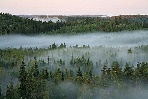 Repoveden kansallispuisto. Kuva: Lassi Kujala