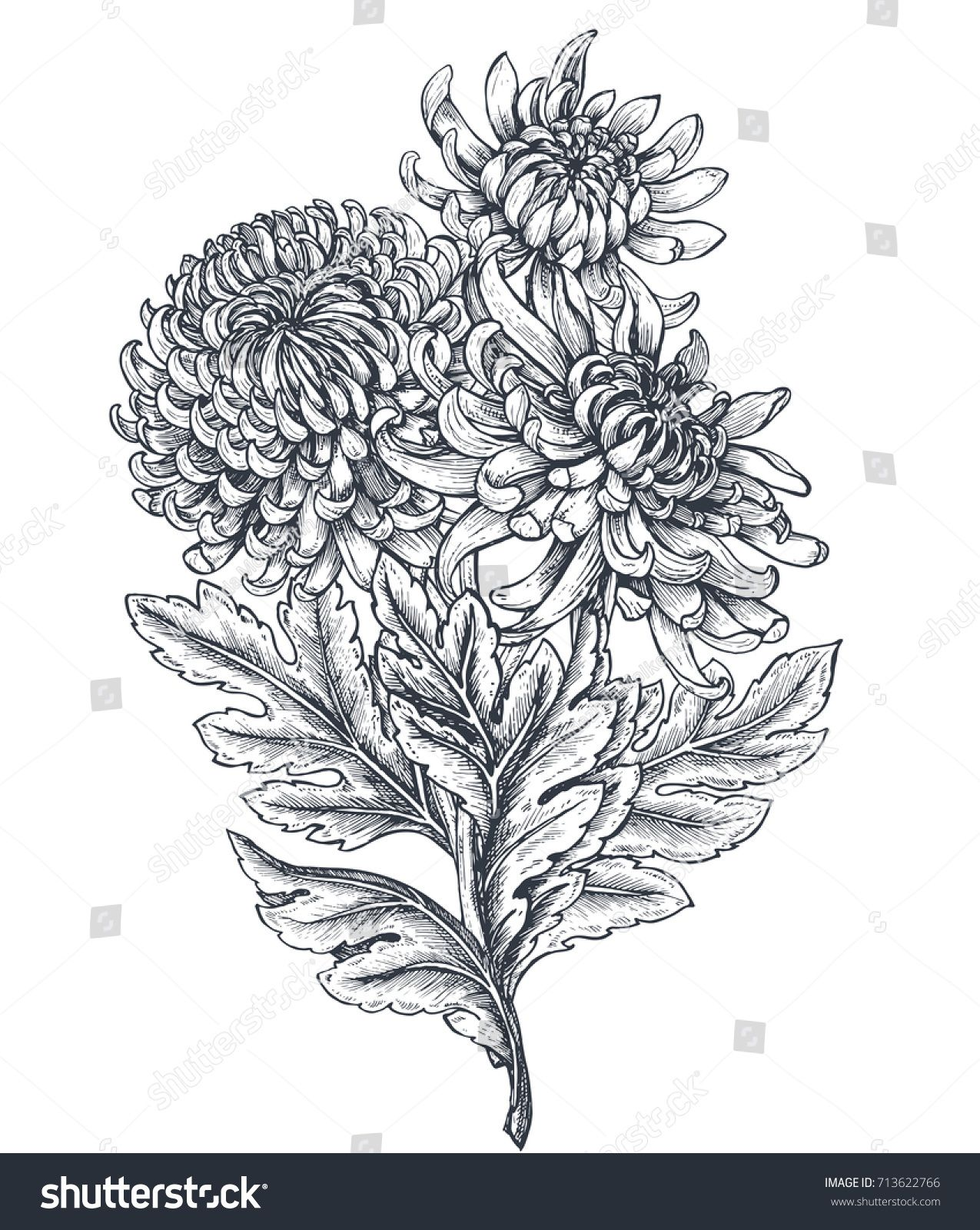 Vector Bouquet With Black And White Hand Drawn Chrysanthemum Flowers In Sketch Style Beautiful Floral Backgrou How To Draw Hands Drawings Chrysanthemum Tattoo