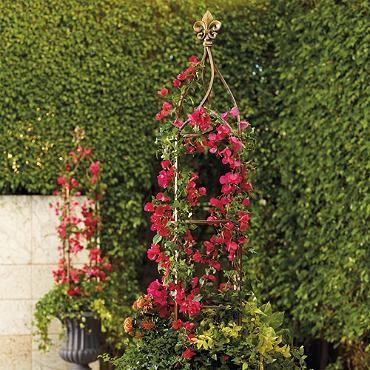 fleur de lis trellis home garden design pinterest clematis