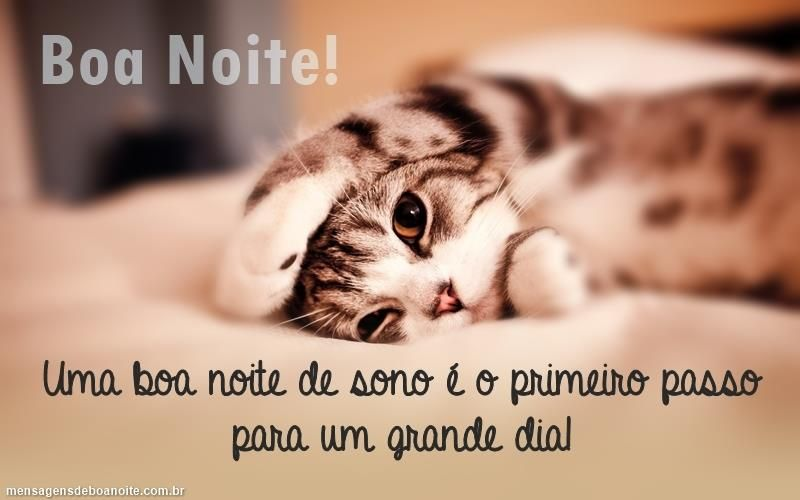 Boa Noite Gato, Gatos E Mensagens