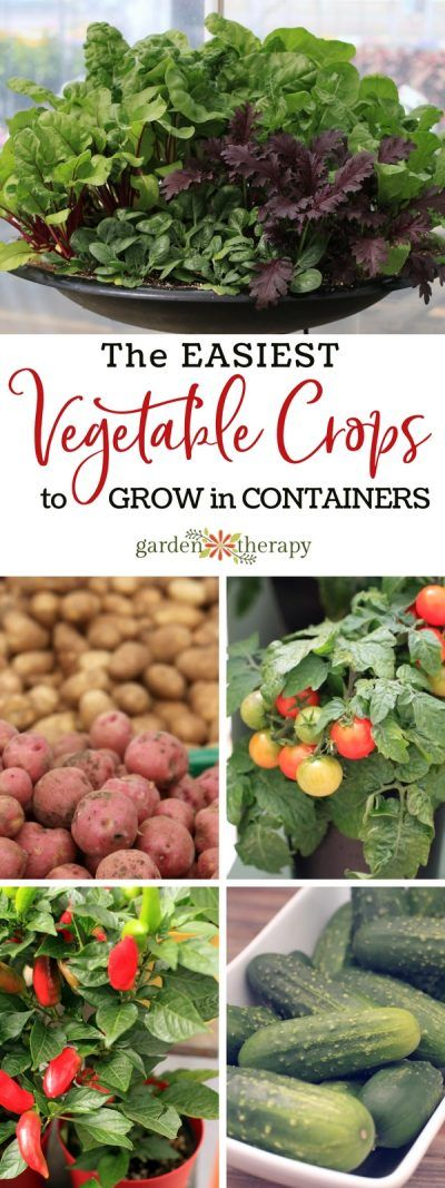 The Easiest Vegetables To Grow In Containers Easy 400 x 300