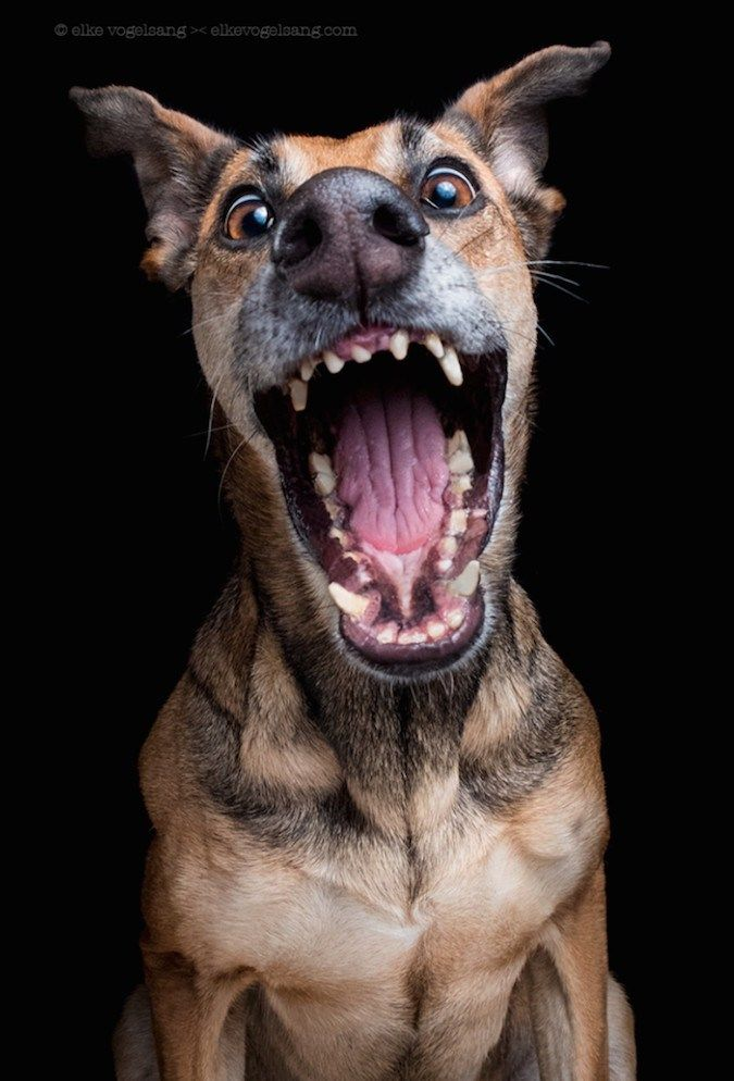 Photographer Creates A Series Featuring Dogs With Fun Facial