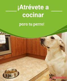 Atr vete a cocinar para tu perro perritos pinterest - Atrevete a cocinar ...