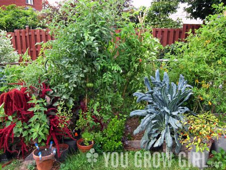 YouGrowGirl.com - great gardening resource | garden ideas ...