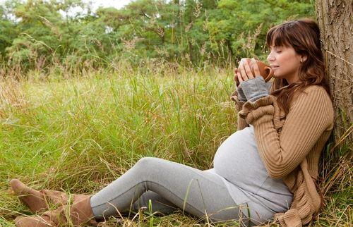 aviva romm herbs during pregnancy pdf