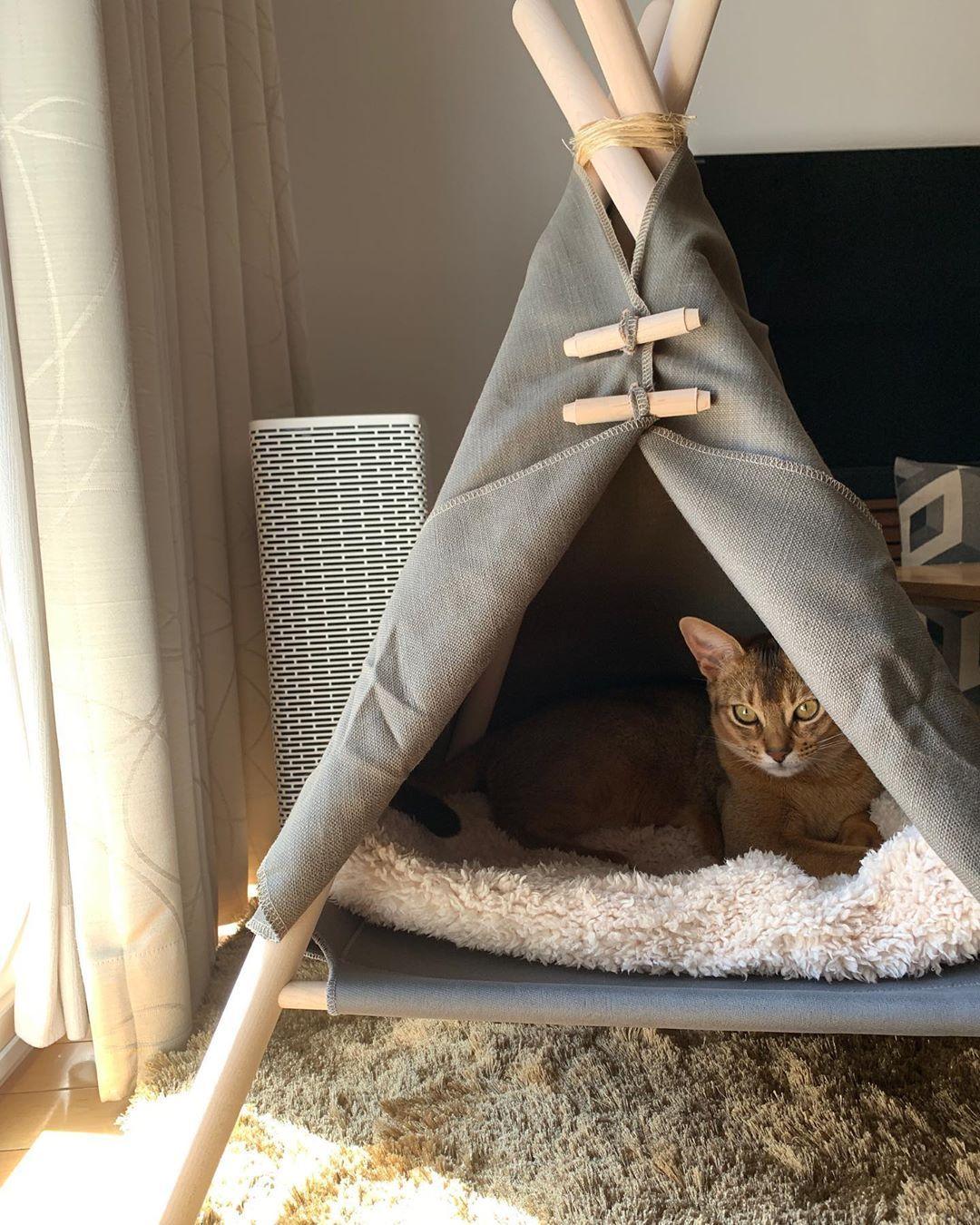 猫用テント なかなか使ってくれなかったけどふわふわ毛布を敷いたら入ってくれた お気に入りスポット e