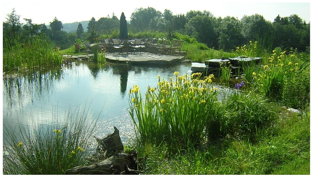 Eco Pool That Looks Like Nature Made It Love It Natural Swimming Pools Natural Pool Natural Swimming Ponds
