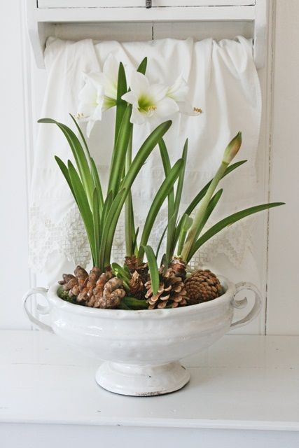 Spring bulbs blooming and pine cone accents