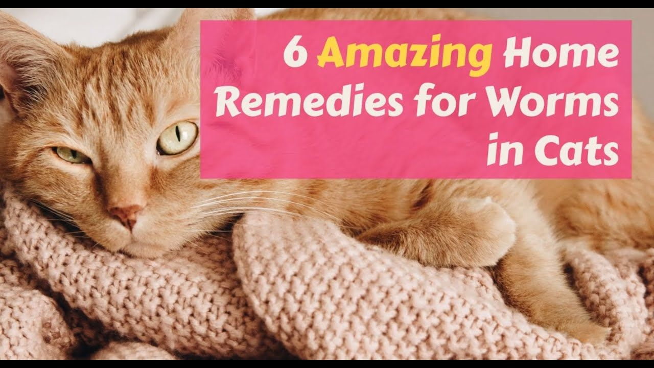 6 Amazing Home Remedies For Worms In Cat Cat Medicine Cat Care Cats