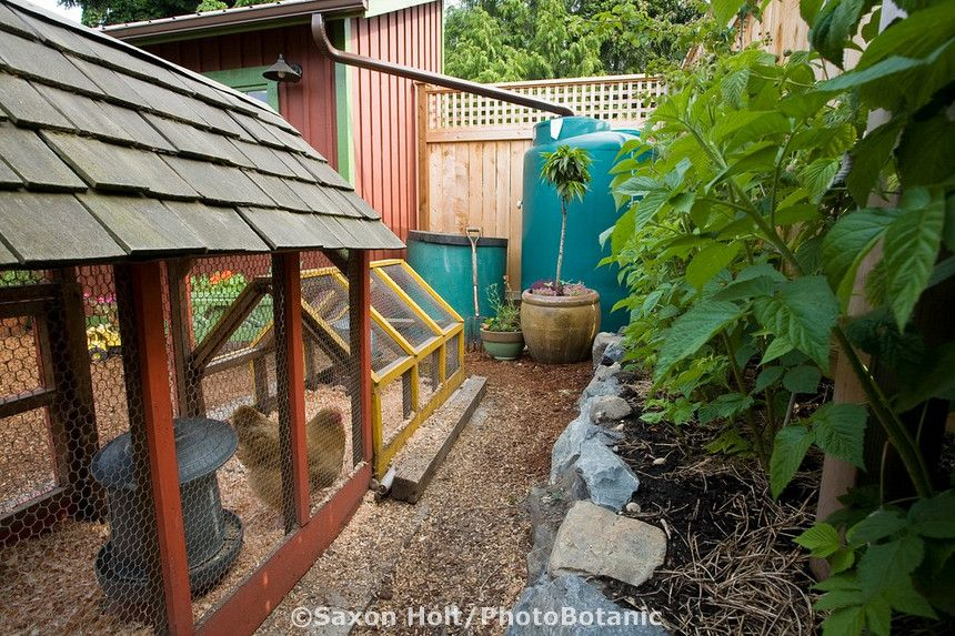 Nice Setup Backyard Sustainable System Chickens Compost Bin Rainwater Cistern Mulched Composted Edible Garden W Farm Gardens Sustainable Garden City Farm