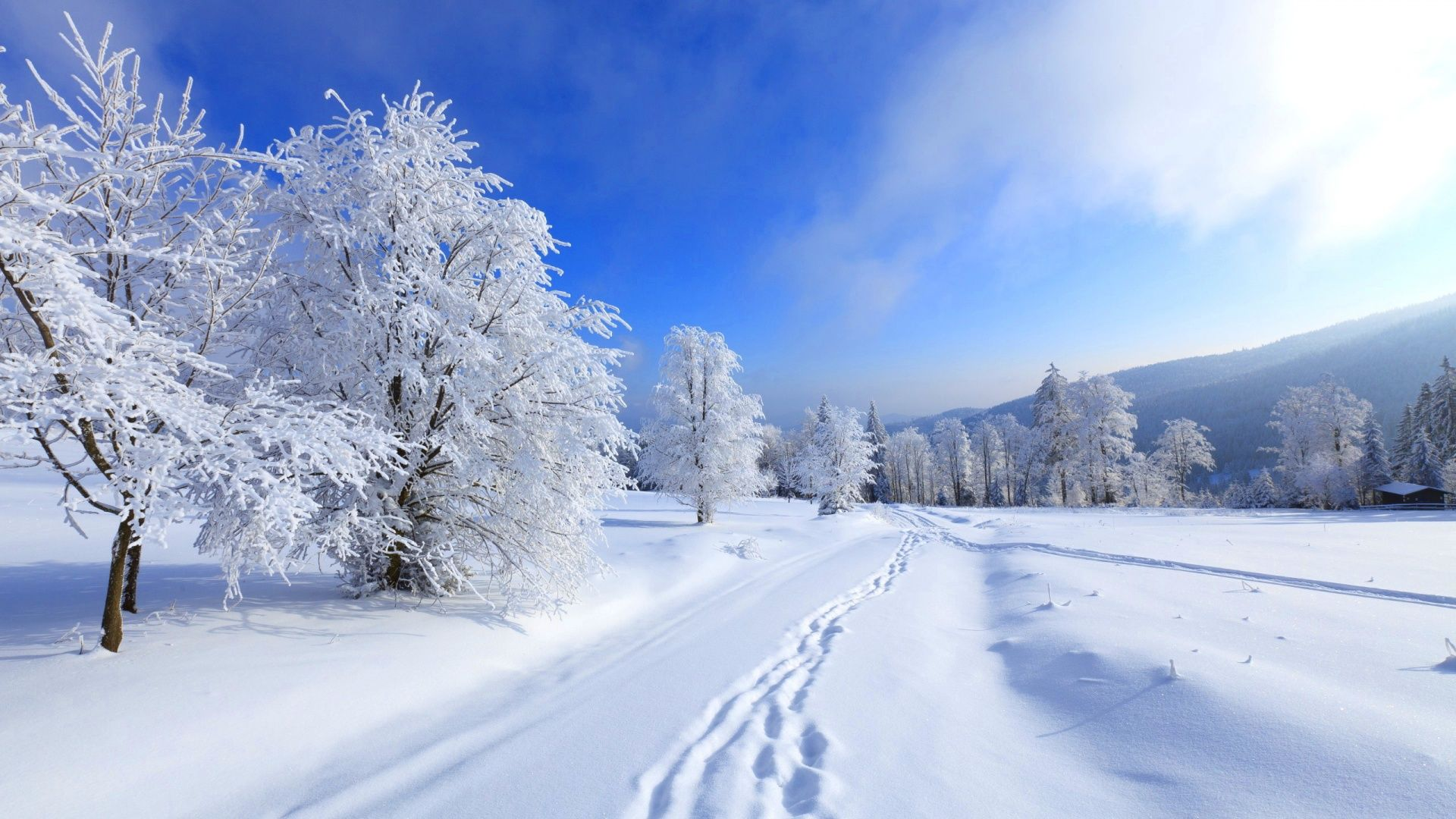 Free Desktop Winter Wallpaper Backgrounds 1440×900 Winter