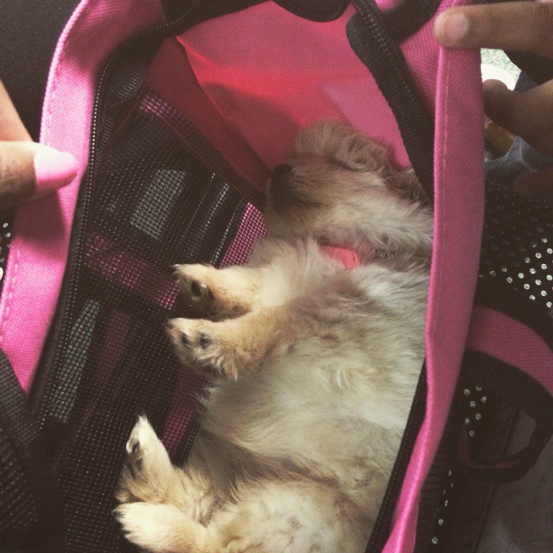 Sleeping in my new bag
