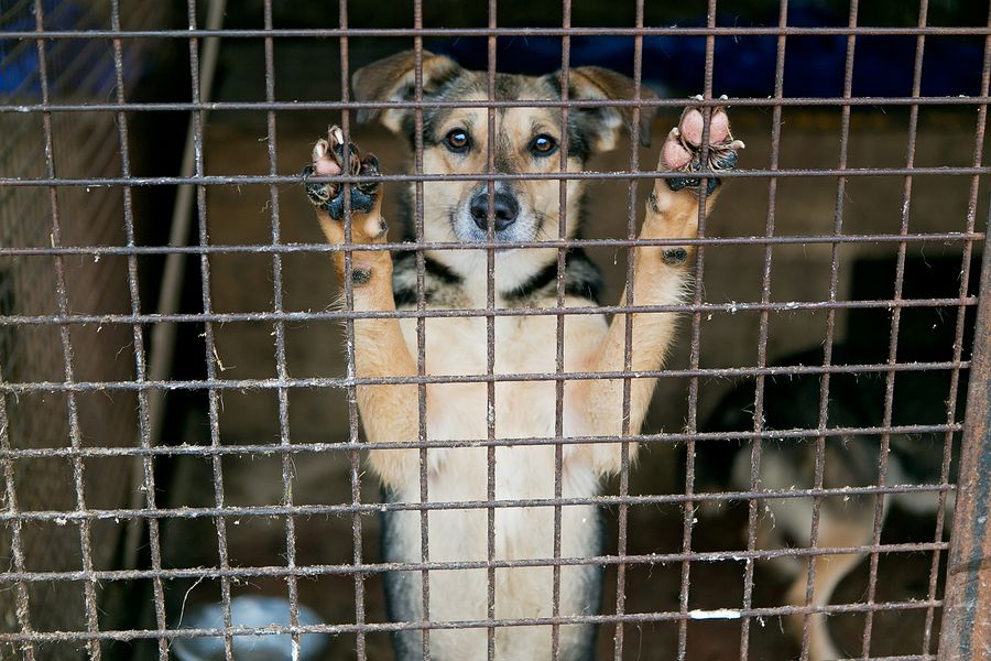 WOW WEDNESDAY A Lost Dog and a Miraculous Rescue The