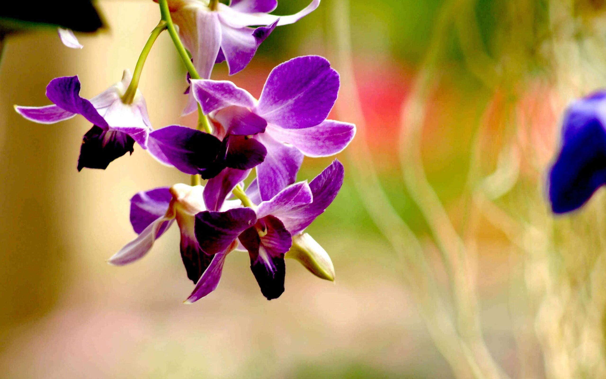 best orchid house plants. Orchid Flower Wallpaper  purple orchid flower image of green