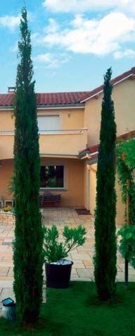 Cypres De Provence X 2 Leclerc 8 90 L Un Pour Mettre Devant L Entree Cypres De Provence Jardins Entree