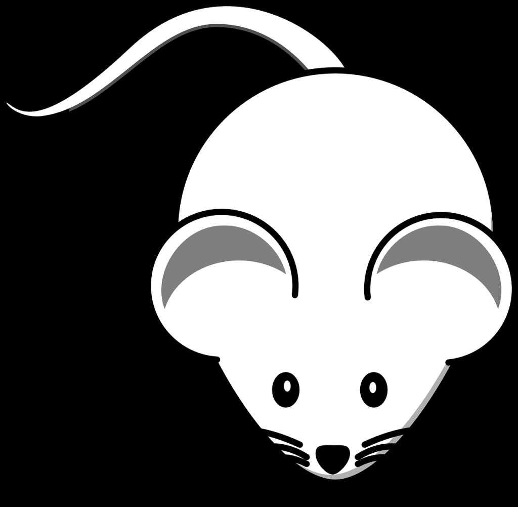 mäuse fangen  nager aus haus und garten entfernen  haus
