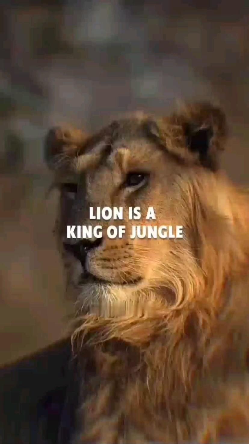 Lion is a king of jungle.🤴 You Know Why?
