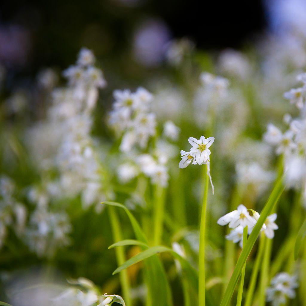 Flowers by Zeeyolq Photography