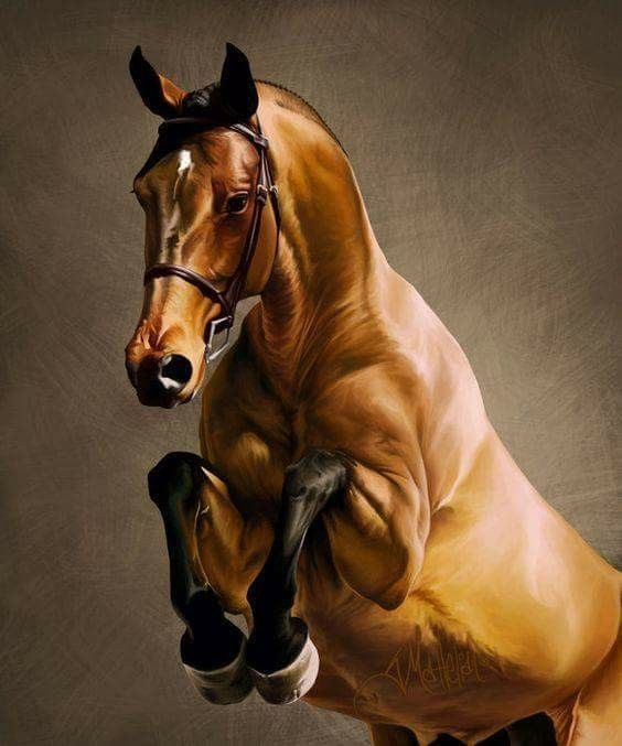 Pin By Veronika Matkova On Horse Horses Jumping Pictures Horse Painting