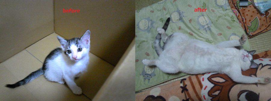 可愛い子猫ちゃんが1年後こうなりました オモバズ 子猫 可愛い子猫 アニマルプラネット