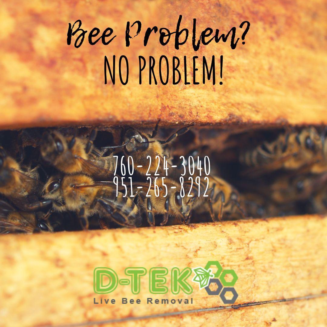 If you've got a bee problem, it's no problem for DTek