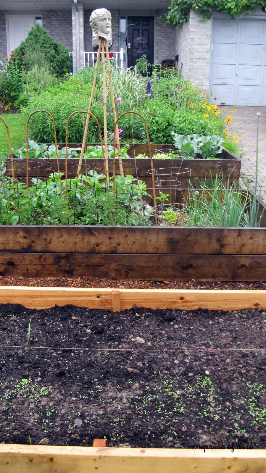 Raised vegetable garden beds in the front yard.