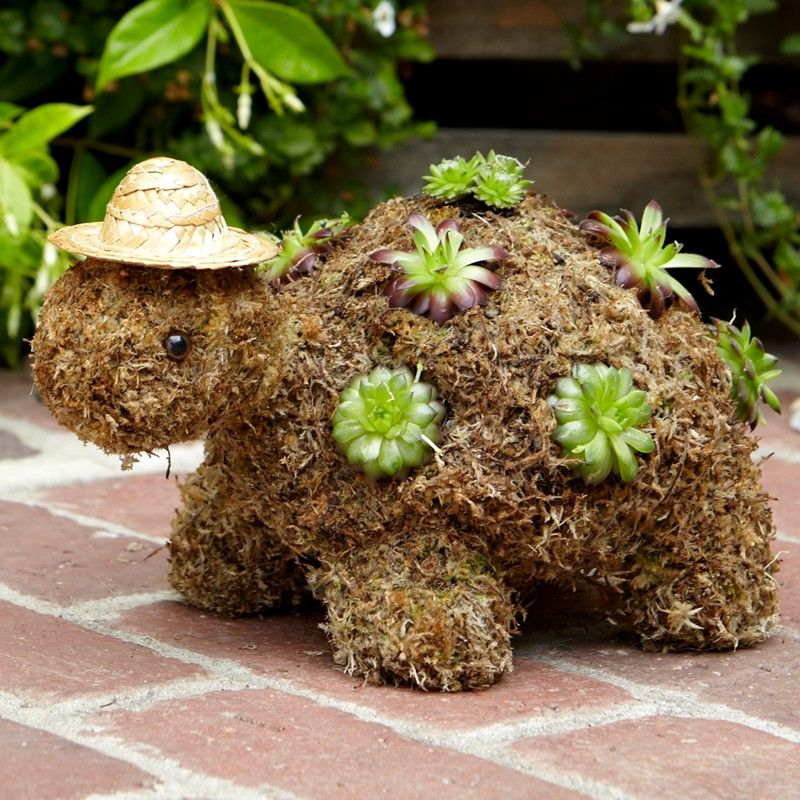 These Succulent Turtles Will Look Gorgeous In Your Garden And No Green  Thumb Is Required! Youu0027ll Also Love The Succulent Ball, It Looks Gorgeous  And Is Very ...