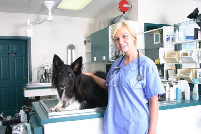 Veterinary Emergency Clinic Is The Best Local Emergency Vet Having