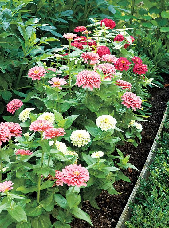 Plan And Plant A Cutting Garden For Fresh Bouquets | Gardening
