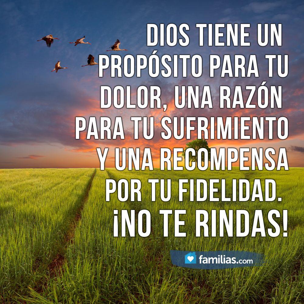 No Te Rindas Dios Tiene Una Recompensa Para Ti Mensaje De Dios Frases Cristianas Pensamientos Para El Alma