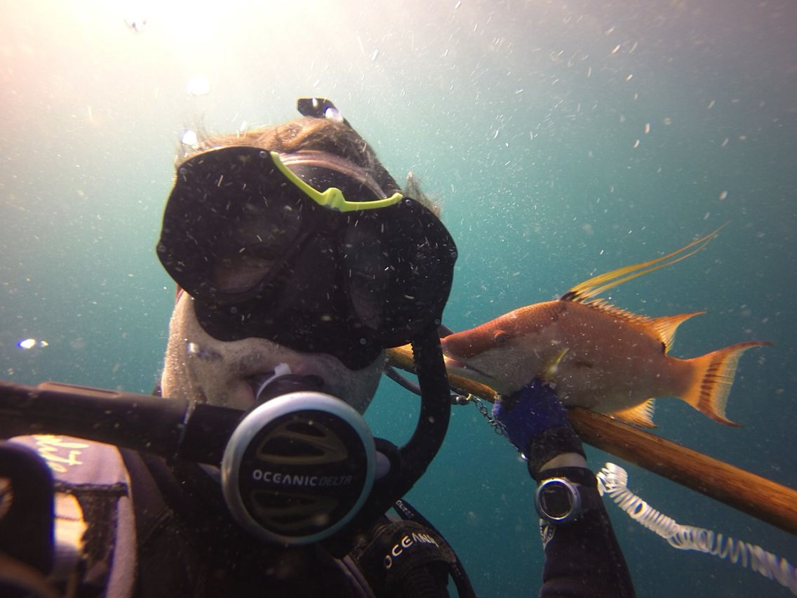 Hog snapper miami diving pinterest hog snapper miami 1betcityfo Gallery
