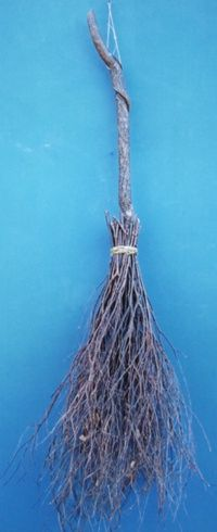 Ceremonial and Handfasting brooms - This shows an Oak handle Circle Sweeping Broom with Birch twigs - Made by master craftsmen at Friendswood Brooms in North Carolina...Circle Sweeping brooms, besoms or brooms for Handfasting can be ordered with your own specific instructions for materials.   You have to SEE all the amazing brooms they make! Check out their website. This photo shows only ONE of their more primitive looking brooms. Their work is truly AMAZING!
