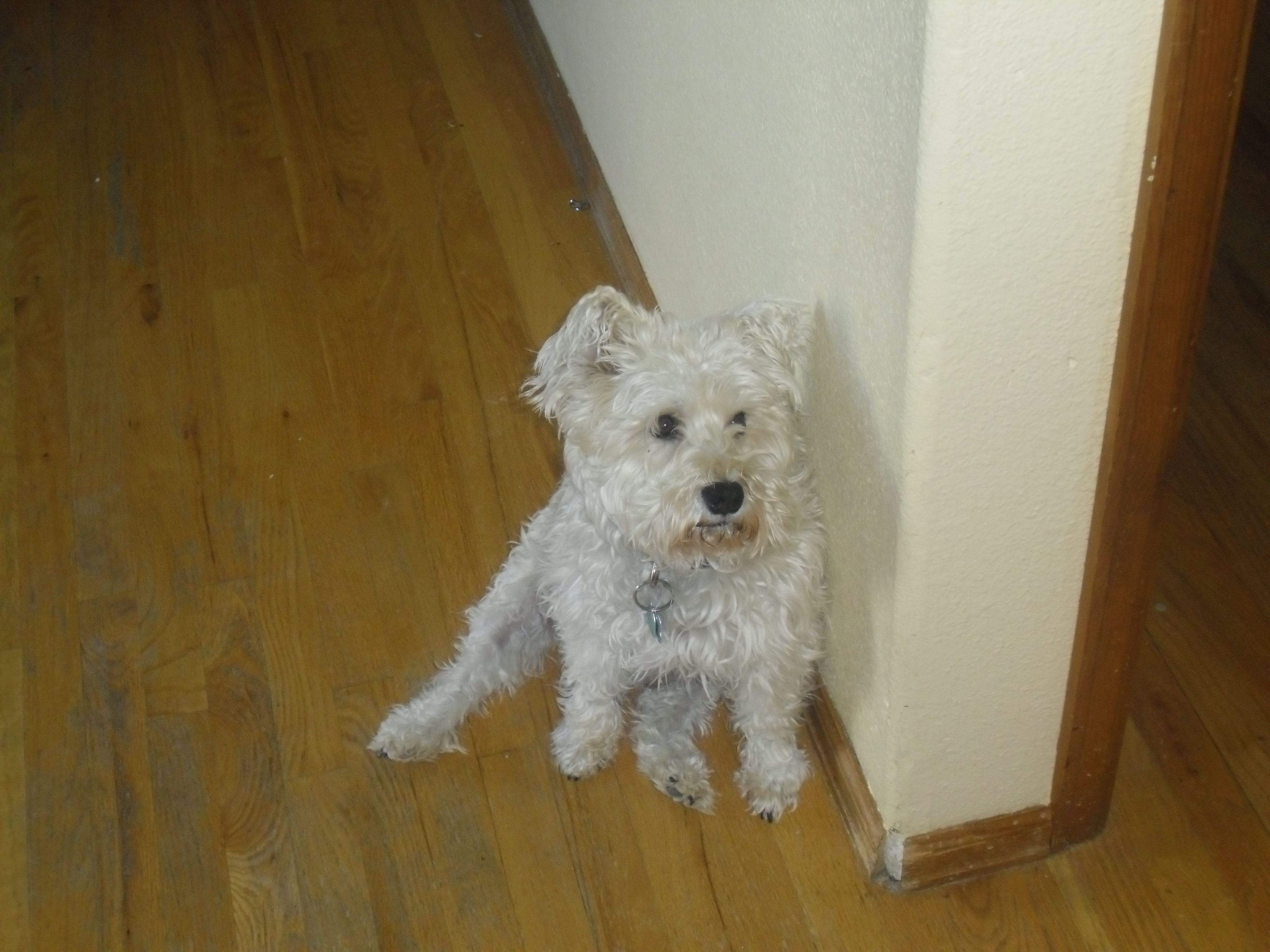 Charlie, my little man :)
