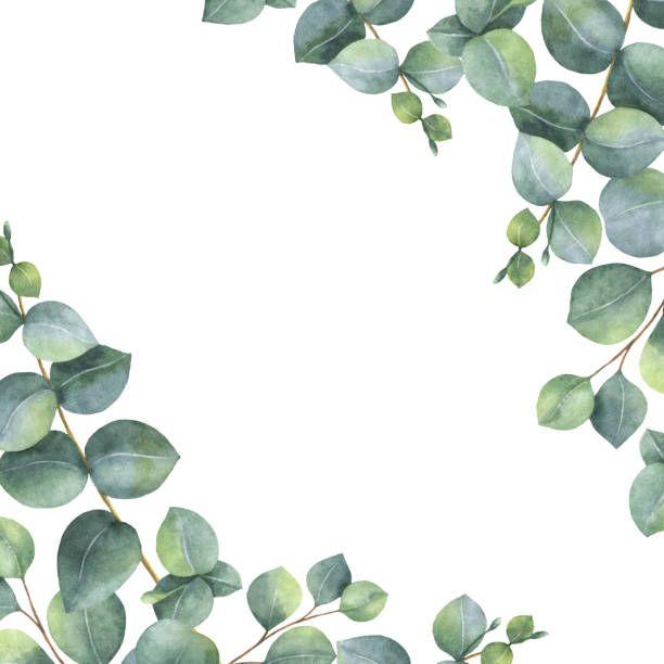 Aquarela Cartao Floral Verde Com Dolar De Prata Eucalipto Folhas E Ramos Isolaram No Fundo Branco Ilust Watercolor Vector Watercolor Green Eucalyptus Leaves